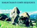 What Are Narayana's Cows and Why Do They Have a Sequence?