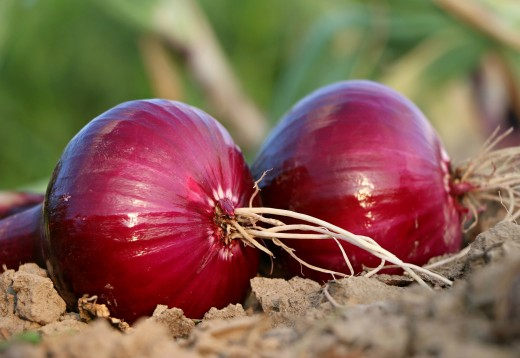 Onions are healthy and are a versatile healthy ingredient for many dishes. But, learn how to cook onions as a featured side dish with this recipe collection.