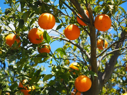 Sunshine is top source of Vitamin D, but oranges can also help.