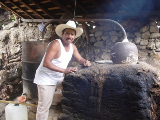 Mexican peon, or campesino, working at mezcal still