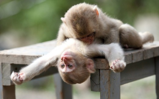 Two Monkeys Goin' At It