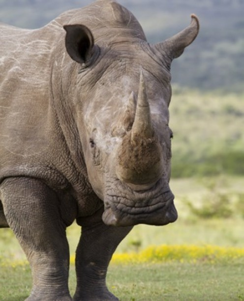 Noteworthy news: Rhino poacher calls South Africa Minister of State Security a friend and special contact