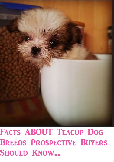 9286c8a2e13 Facts About Teacup Dog Breeds Prospective Buyers Should Know ...