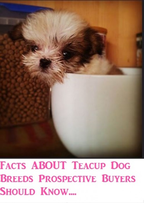 Facts About Teacup Dog Breeds Prospective Buyers Should Know