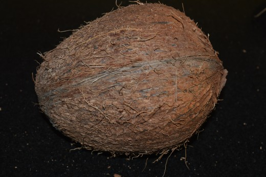 matured coconut