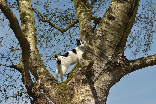 stock image of a treed cat