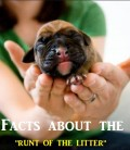 Interesting Facts About the Runt in the Litter