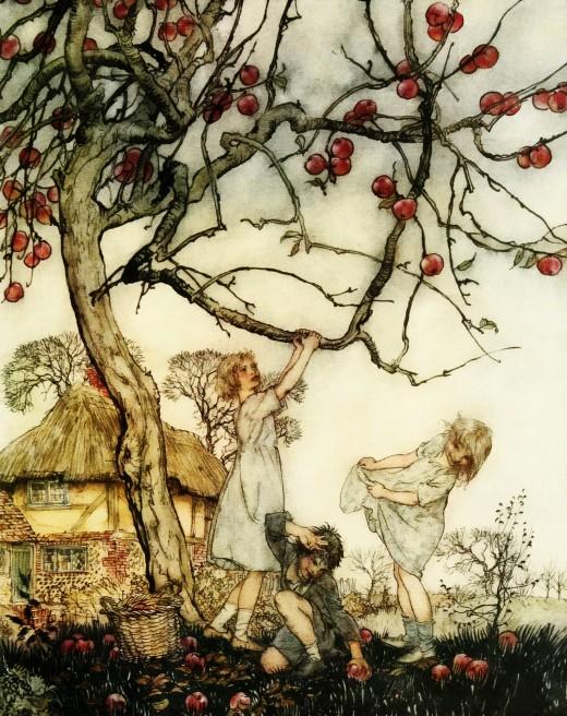 "Arthur Rackham's illustration ""Apple Harvest""."