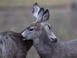 Paper Heart Deer ~