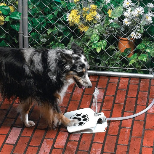 The pet water fountain lets your pet get his own water in the yard