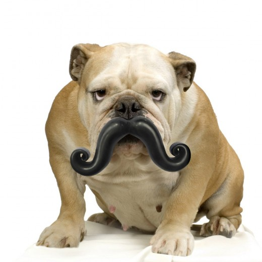 Get a 'Stache for your dog