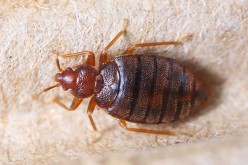Tips For Apartment Bed Bug Control