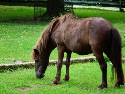 Pony Breeds That are Amazing Part I