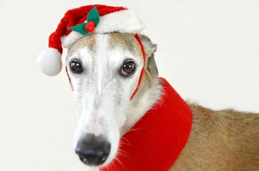 The Christmas Greyhound