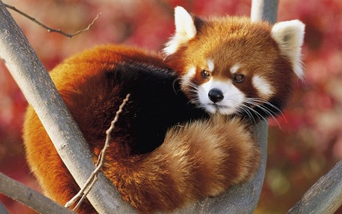 The 10 Most Adorable Japanese Animals Ever!