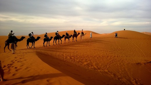 Camels May Affect some Strange Responses