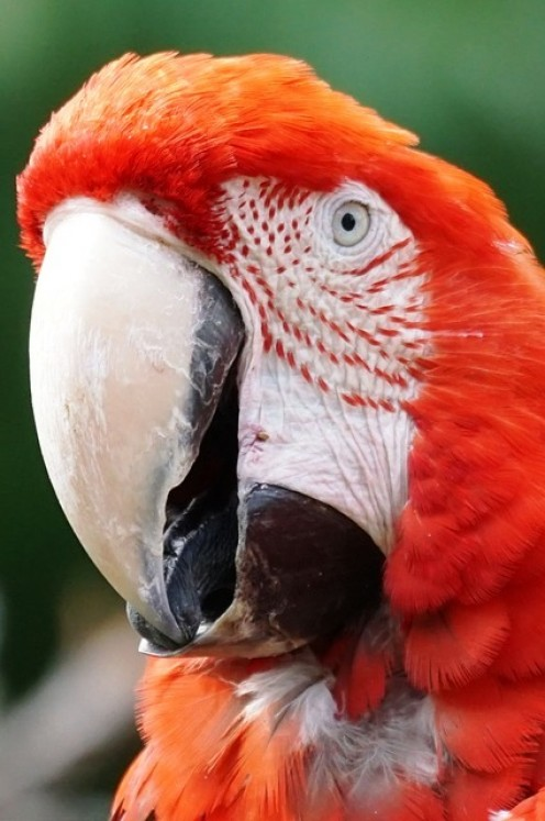 In a contest between an appendage and a beak, the beak will win. Owner beware.