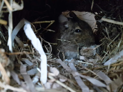 Ash in his nest box