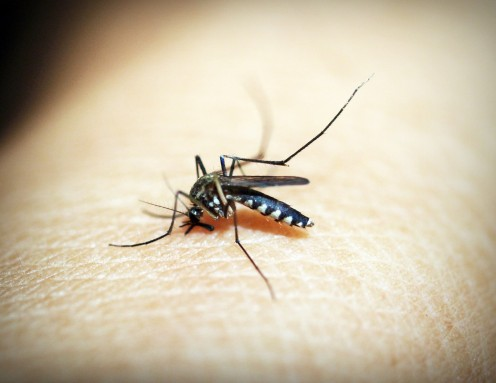 Mosquito bites are rarely felt as they are happening