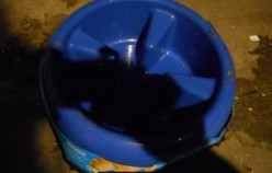 Minnesota Dog Feeding: Slow Bowl for Dogs That Eat too Fast