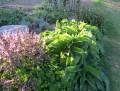 Herbal and Folk Remedies