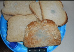 Minnesota Musing: Moldy Bread - How Moldy Can It Be Before I Get Sick