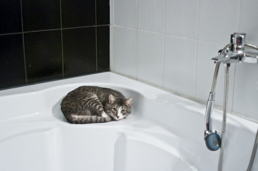 So the kitties steal the shower for their new bed.