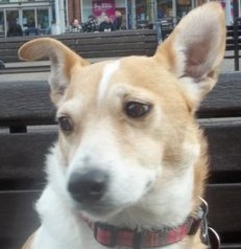 This is my Jack Russell, Ollie.