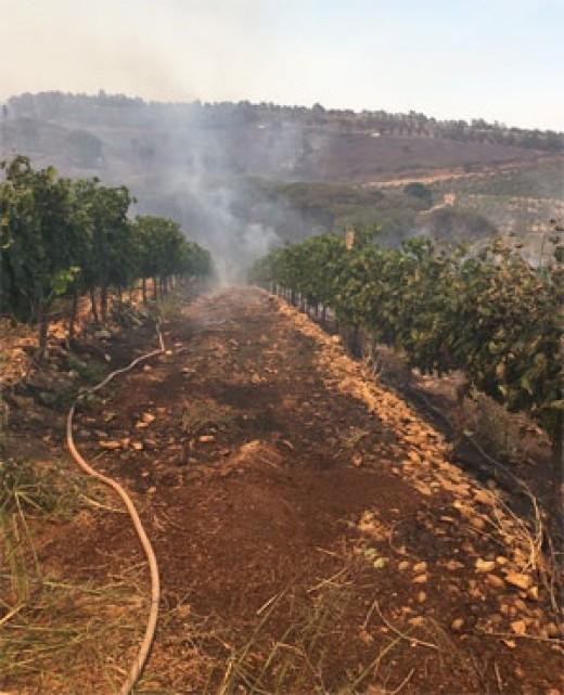 Druk-My-Niet wine farm