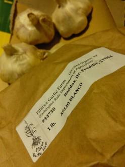 Growing Organic Garlic: the basics