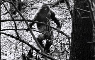 Bigfoot sighting on Animal Planet  Bigfoot sightings in California