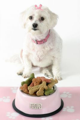 Every dog that checks in to the Cambria Shores Inn receives doggie biscuits! Yummy!