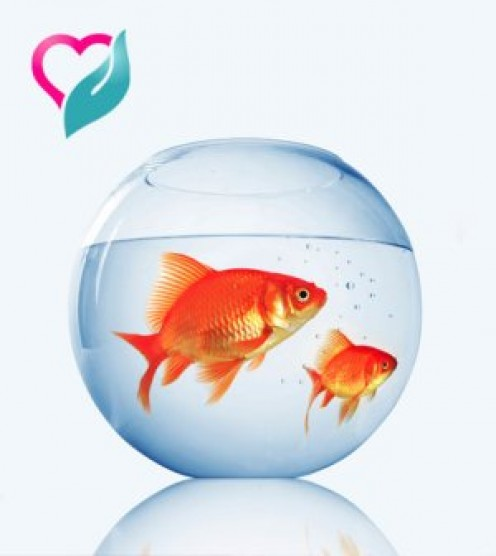 The Healing Power of Pet Fish