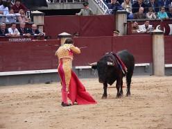Bullfighting is Back as a Spectator Sport