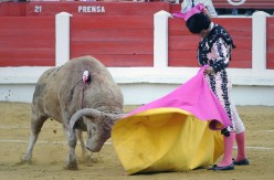 Bullfighting is Back as a Spectator Sport