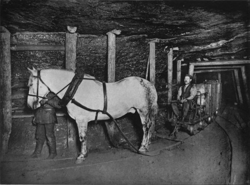 A pit pony in Germany (1894) working in a mine
