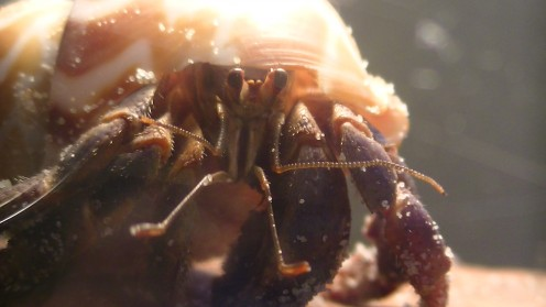 How to Care for Land Hermit Crabs