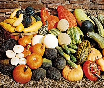 Phenotypic variations in the Gourd Family