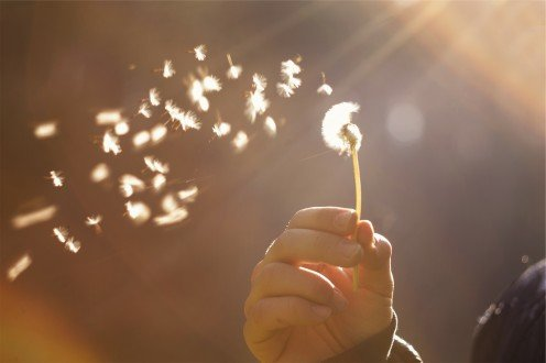 Blowing on a dandelion with glee unconcealed.