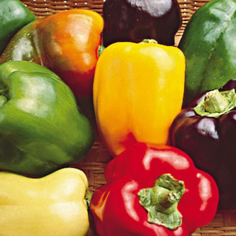 Photo includes popular colors of bell peppers.