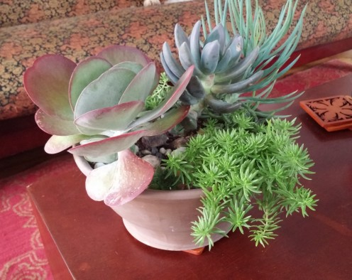 Create a garden of succulents to last for years to come.