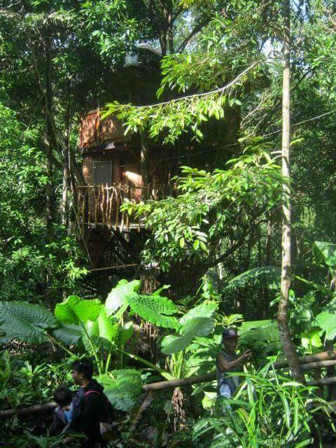 And this is the tree house, good for overnight stay