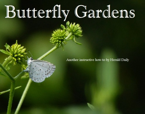 Follow the tips in this hub to create your own paradise for butterflies. Then sit back and enjoy!