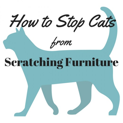 Learn easy ways to help prevent your cat from scratching the furniture.