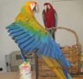 From the parrot's beak: Feb 12 edtion