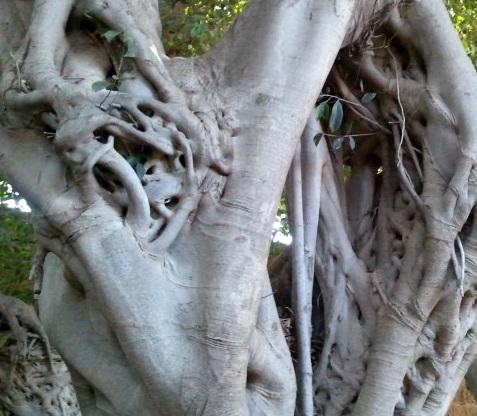 Lovely neighbourhood tree-1