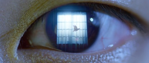 The bird in Jin's eye at 2:09.
