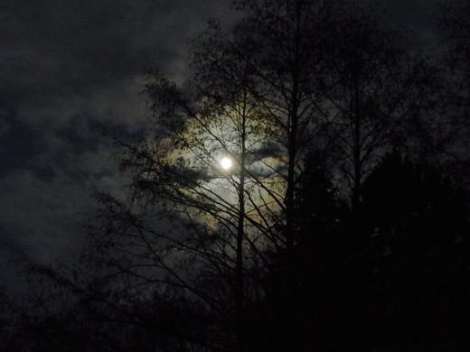 Moonlight's glow