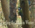 How to Create Your Own Bird Feeders - Feeding the Birds in Winter