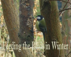 4 Easy Ways to Feed the Birds in Winter